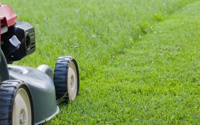 Tips on Lawn Mowing Frequency and Length of Cut