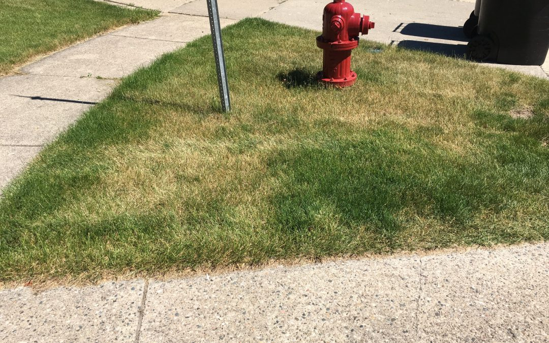 Drought Stress in Michigan Lawns