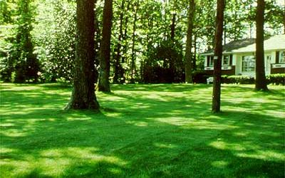 Improving Lawns in Shade