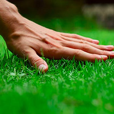 Muskegon lawn care - AAA Lawn Care