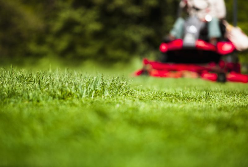 Lawn Care & Pest Control Testimonials – May 2018