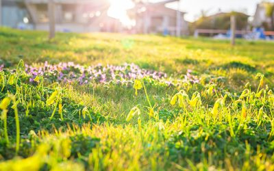 What It Takes To Get a Gorgeous Green Lawn
